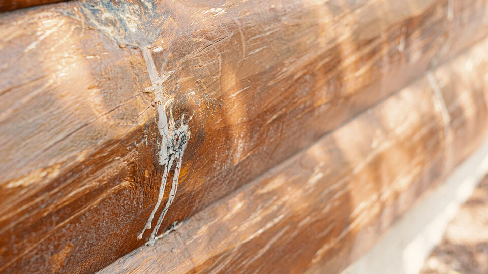 Red pine knots bleeding sap